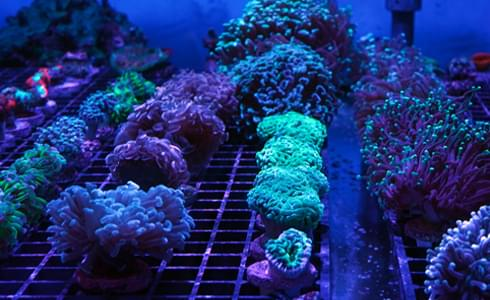 coral care advice