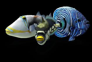 non reef