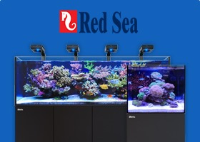 Red Sea Tanks