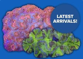 Latest Corals