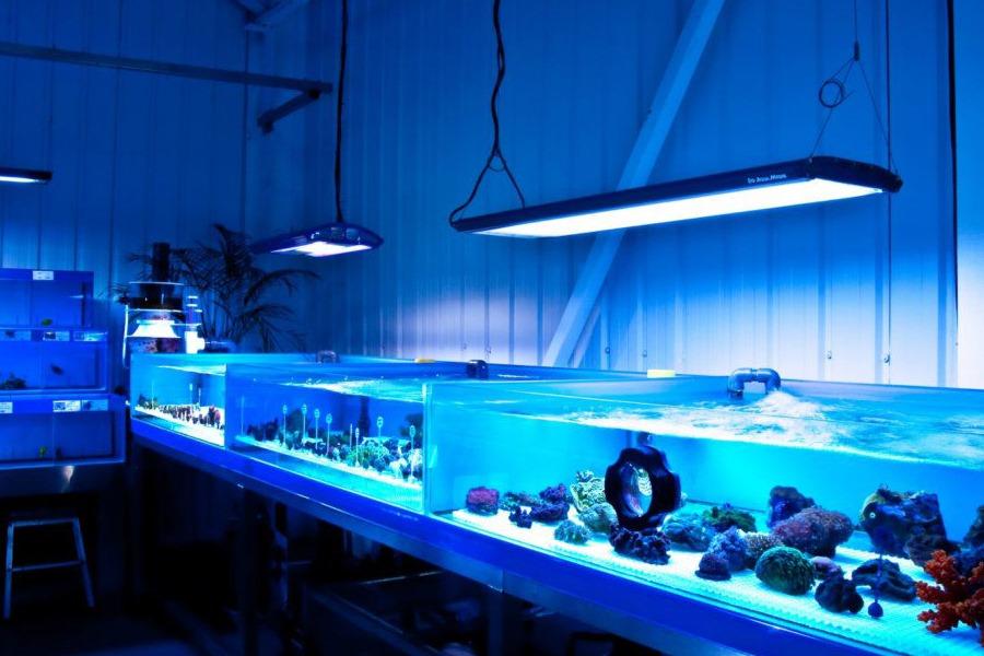 coral frag tanks