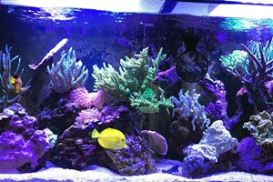 One of our show tanks