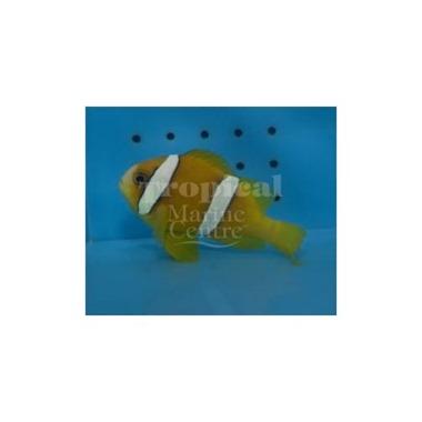 Clark's Clarkii Clownfish
