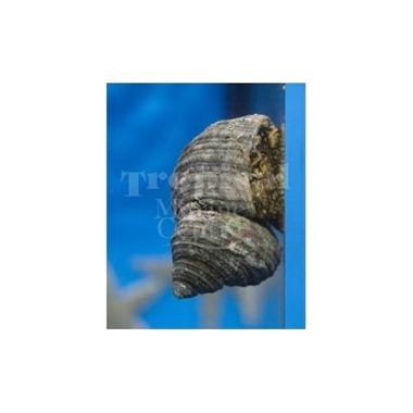Super Turbo Snail