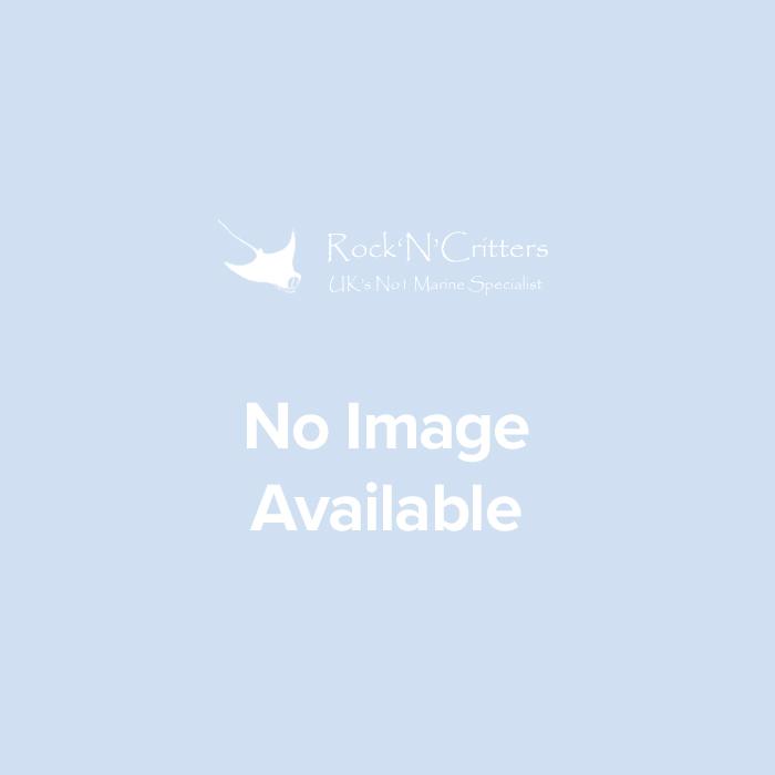 Crosshatch Pearlscale Butterflyfish